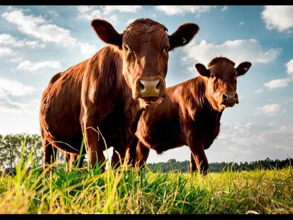 关于防止斯里兰卡牛结节性皮肤病传入我国的公告