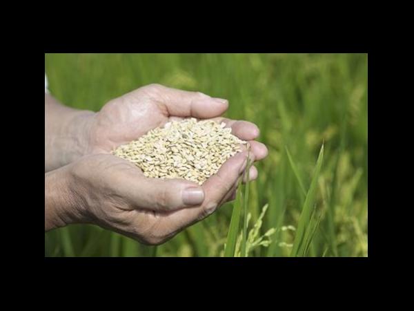 中国去年粮食进口1.4亿吨 成国际干散货市场新亮点