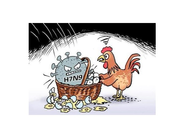 关于防止爱尔兰高致病性禽流感传入我国的公告