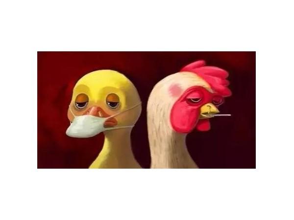 关于防止阿尔及利亚高致病性禽流感传入我国的公告